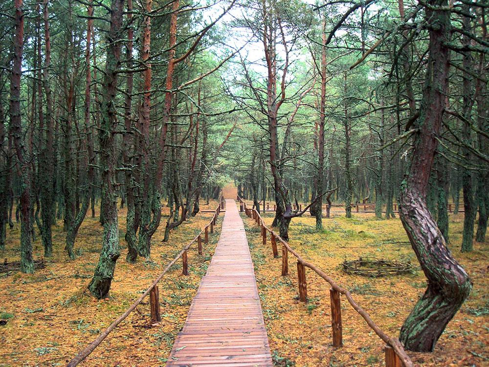 Тропа здоровья на Куршской косе (самая западная точка России)