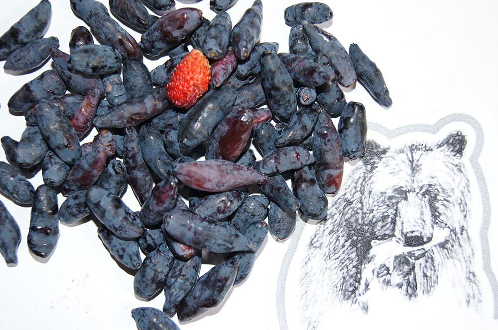 Дача на Сахалине урожай жимолость