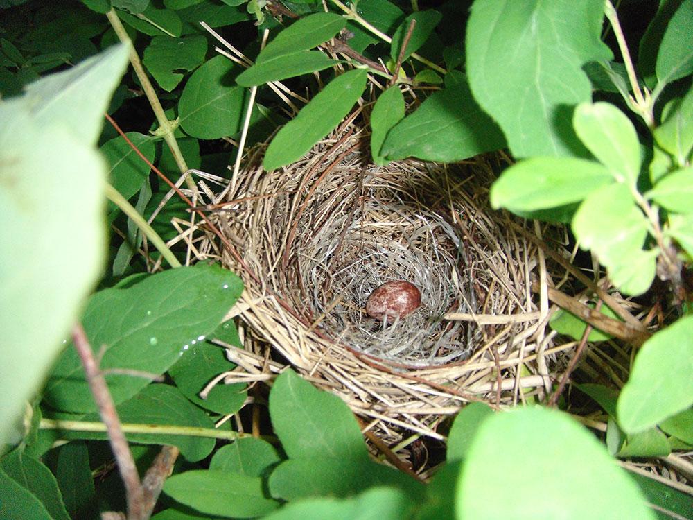 Дача на Сахалине гнездо