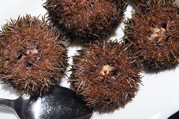 Морской еж - сахалинский деликатес
