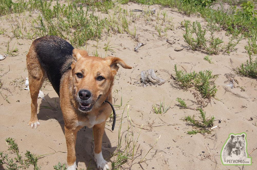 Юг Сахалина лето море озера шашлык собака