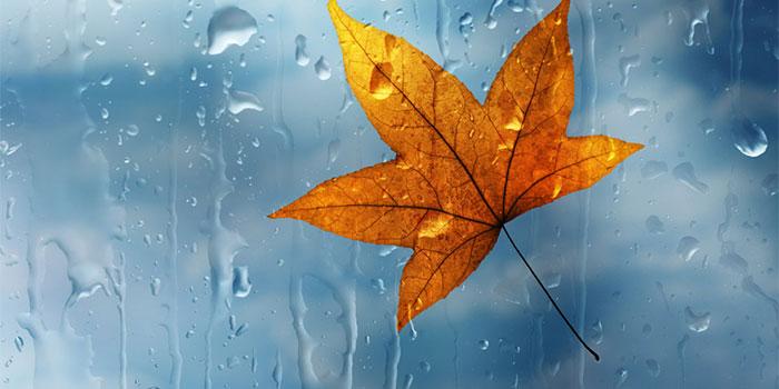 осень дождь листья хандра