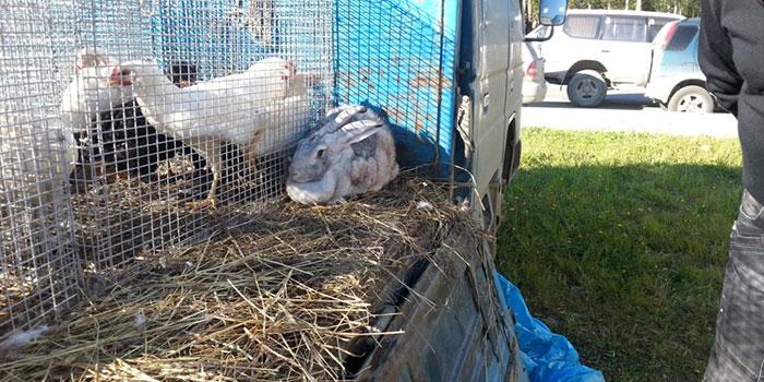 ярмарка в южно-сахалинске кролики птица