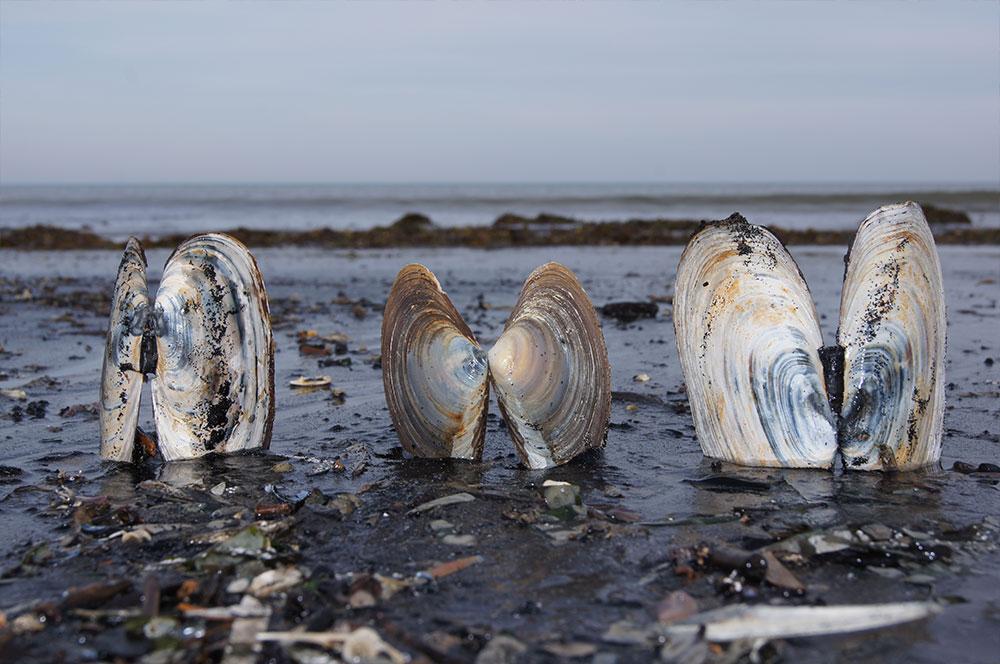 Фотографии Сахалина залив Мордвинова октябрь 2013