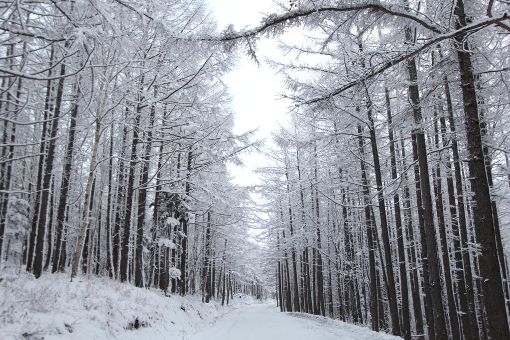 фотографии зимней дороги на горный воздух южно-сахалинск