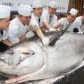 Giant-Tuna-_tux5