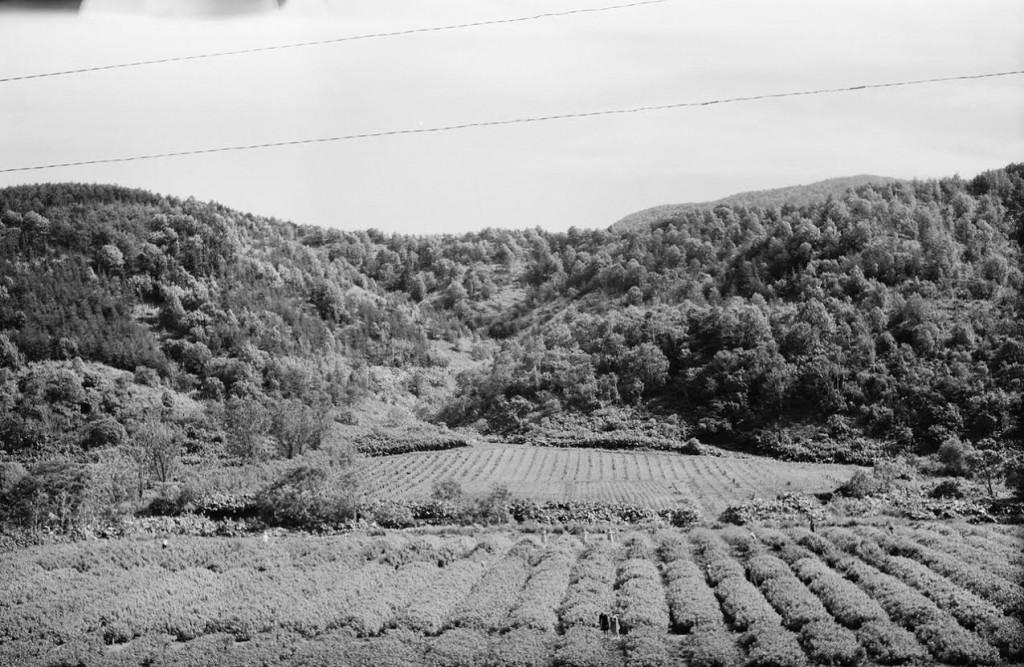 1954-16